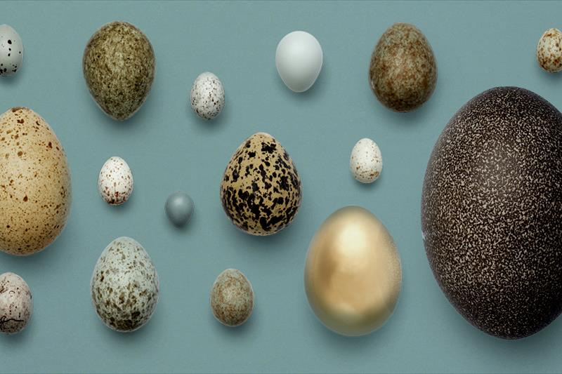 Egg exhibition at the Museum of Natural History