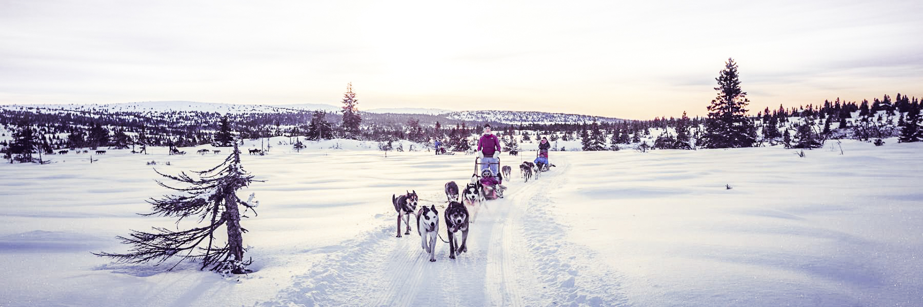 Dog sledding near Lillehammer