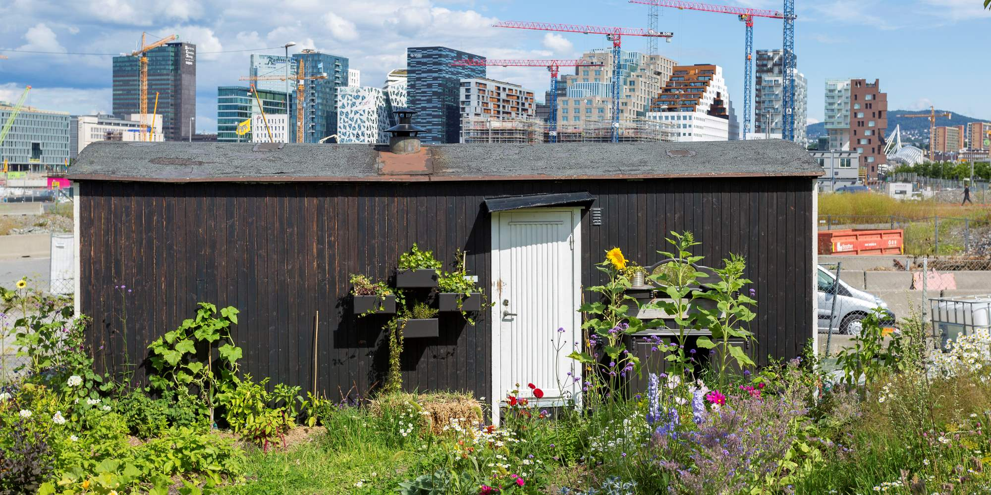 Losæter urban farm at Sørenga
