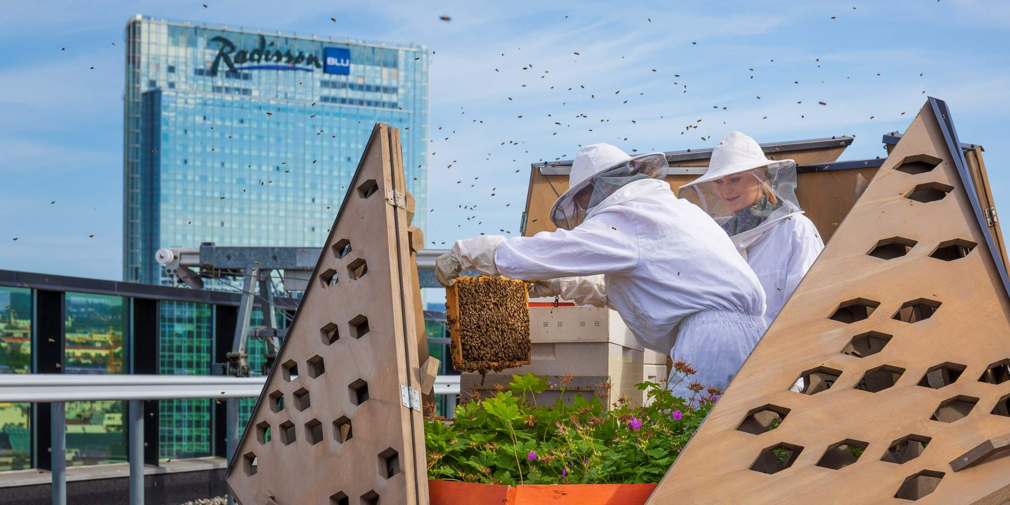 Urban beekeepers in Barcode